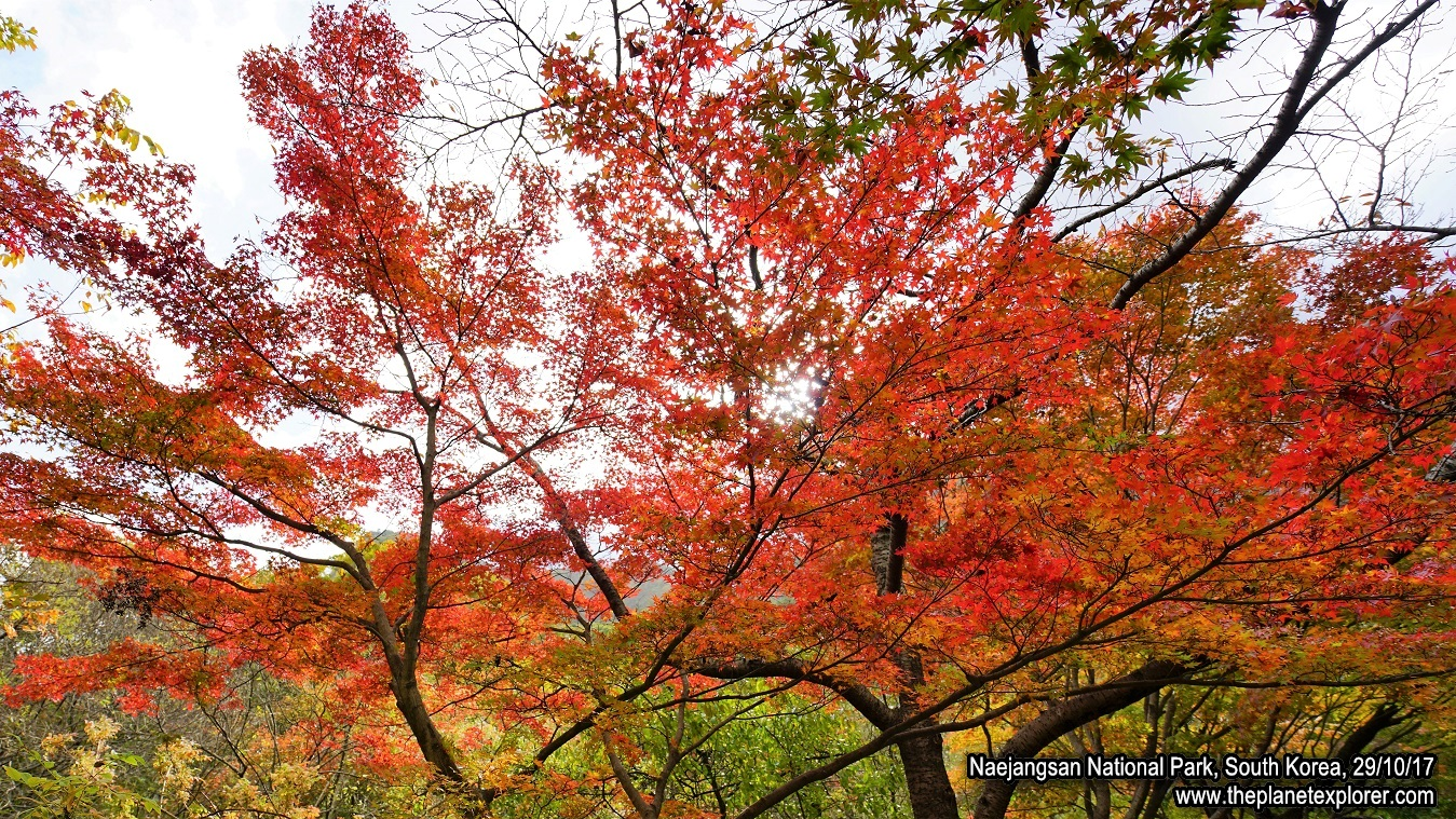 20171029_1425_South Korea_Naejangsan National Park_DSC06431_Sony a7R2_LR_@www