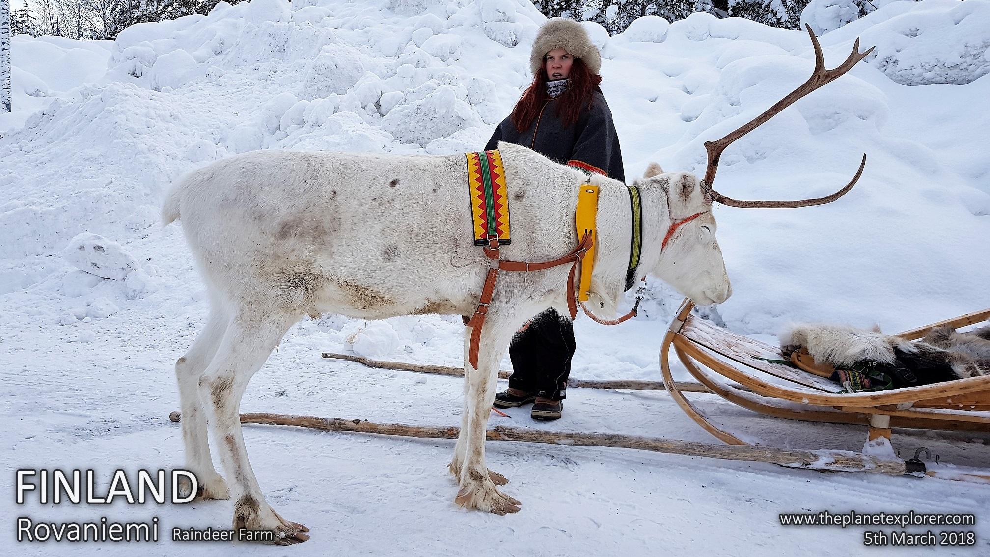 10180305_1110_Finland_Rovaniemi_Raindeer Farm_Raindeer_Samsung Note 8_LR_@www