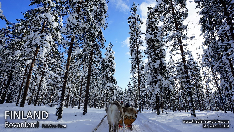 20180305_1139_Finland_Rovaniemi_Raindeer Farm_DSC09442_Sony a7R2_LR_@www