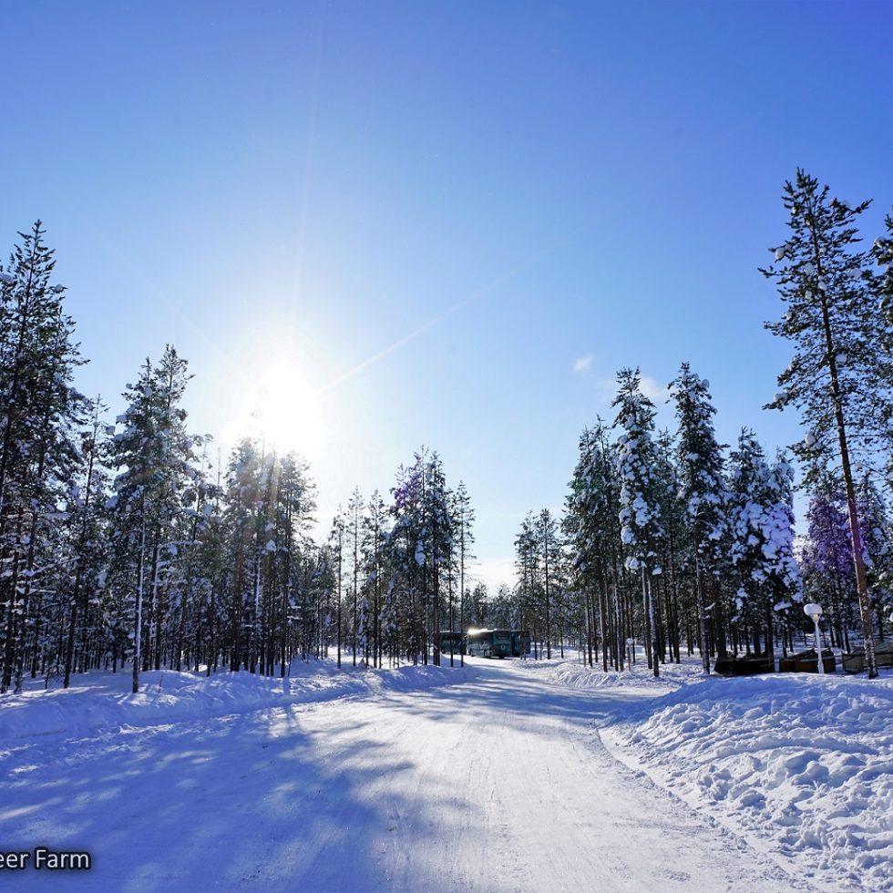 20180305_1321_Finland_Rovaniemi_Raindeer Farm_DSC09489_Sony a7R2_LR_@www